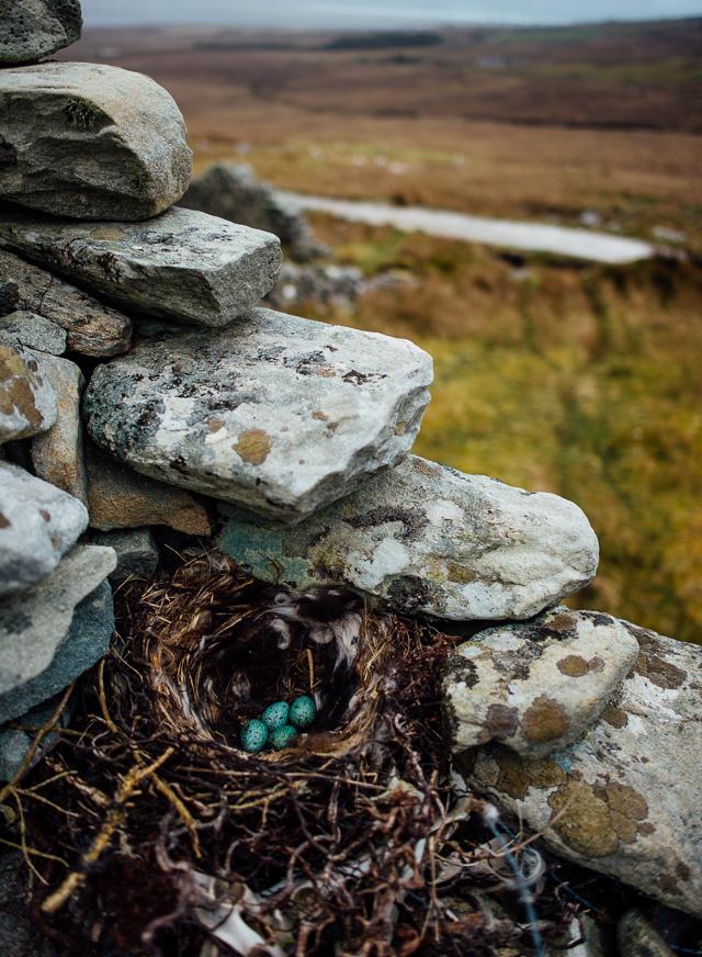 Irland-Schlösser und Herrenhäuser - Rundreise - Marion and Daniel  (35 von 100)