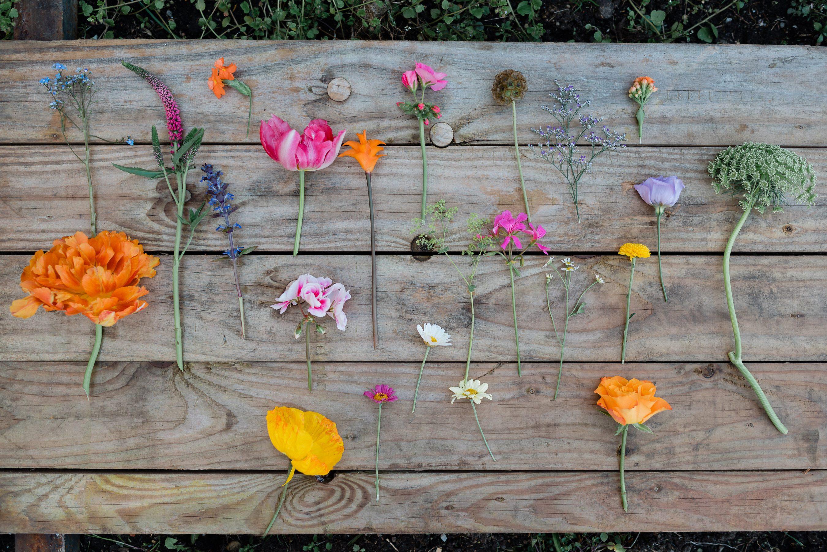 AnnaZeiterphotography_Flowershoot-1319