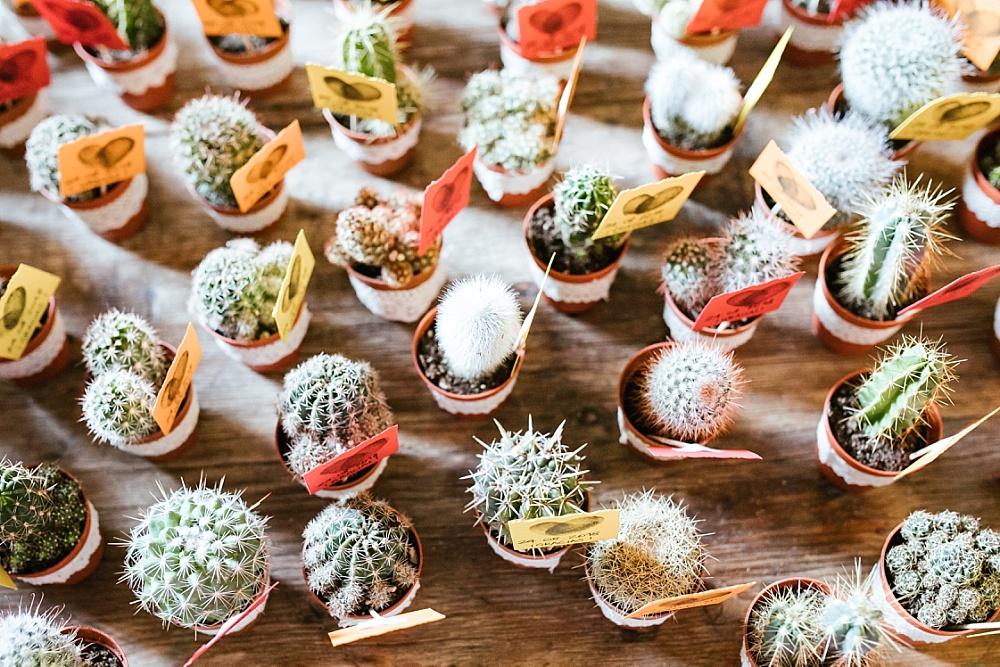 Kakteen als Gastgeschenk für Hochzeit